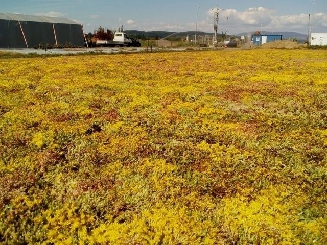 (Română) Rulou de vegetație rezistentă la secetă - Sedum