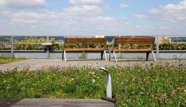Terasă verde tip deck cu acces pietonal