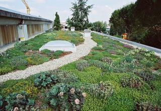 Acoperiș verde intensiv tip grădină