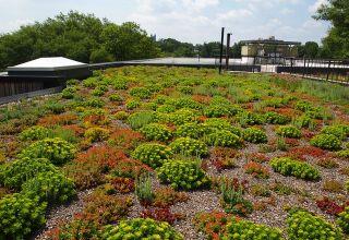 Economy roof