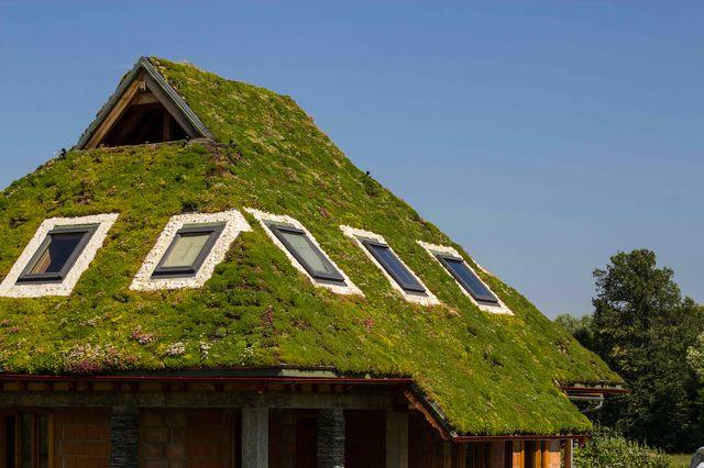 (Română) Acoperiș verde extensiv cu pantă de 45 grade