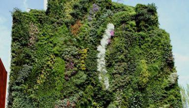 Függőkertek, zöld falak