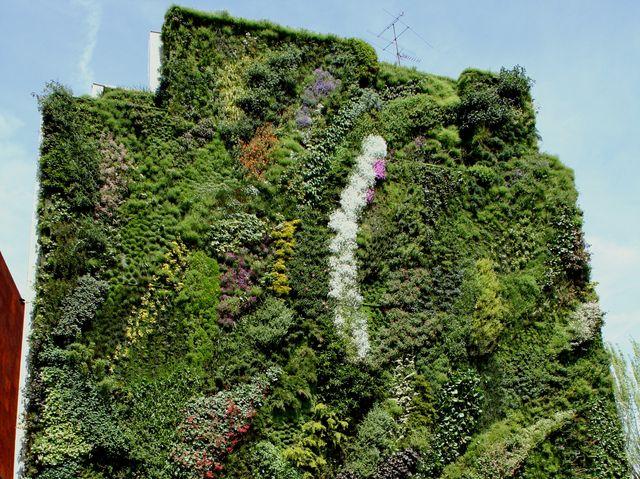 Grădini verticale, pereți verzi