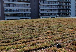 (Română) Acoperiș verde extensiv la Kaufland, București