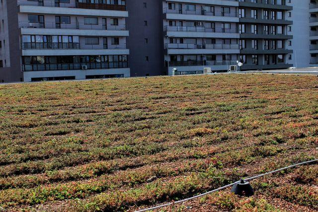 Acoperiș verde extensiv la Kaufland, București