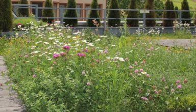 Félintenzív - biodiverz növényzet