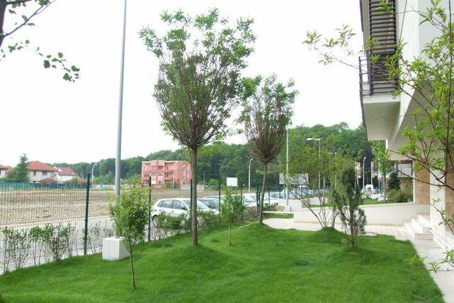 Intensive vegetation - Trees