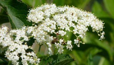 Intenzív növényzet - Cserjék