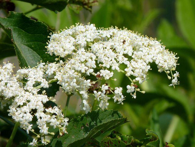 Intensive vegetation - Shrubs