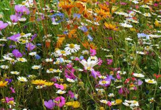 Seminţe pentru acoperiş biodivers