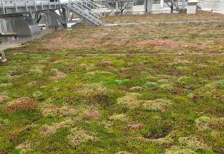 Acoperiș verde extensiv ultraușor pe magazinul Kaufland Bragadiru