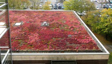 Cehia adoptă acoperișurile verzi