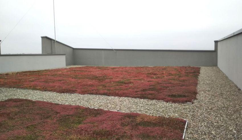 Pregătirea acoperișurilor verzi pentru iarnă