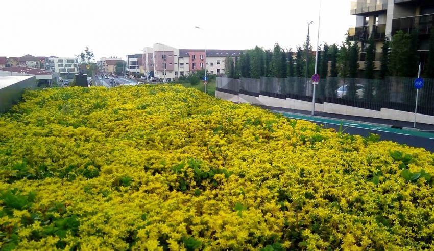 Stații de autobuz cu acoperiș verde, în Cluj