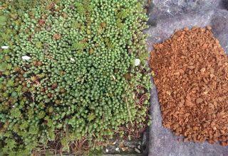 Substratul pentru acoperișul verde – de ce este atât de special?