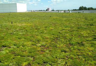 Terasă verde ultraușoară irigată de 2.900 mp pe un nou supermarket Kaufland din Constanța
