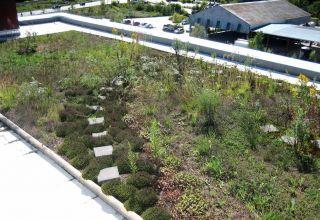 Toronto a impus de acum 10 ani ca orice imobil nou cu suprafața la sol de peste 2000 mp să fie prevăzut cu acoperiș verde